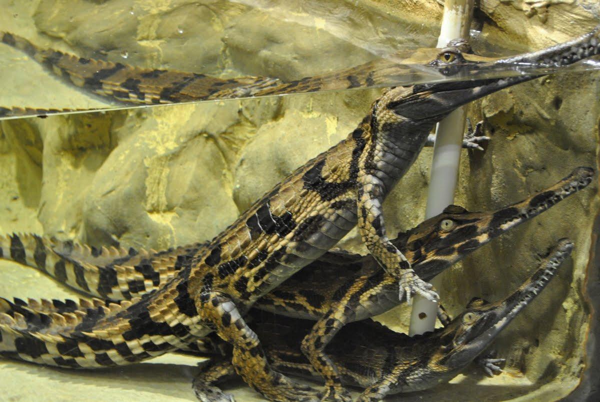 крокодилы в ялте