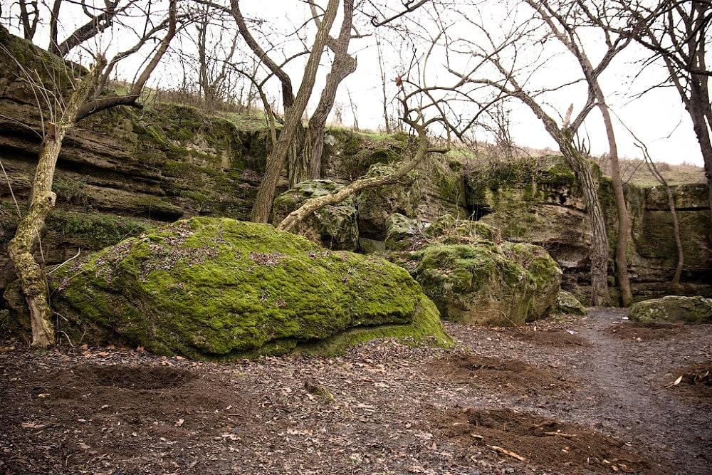 Деревья у Плачущей скалы