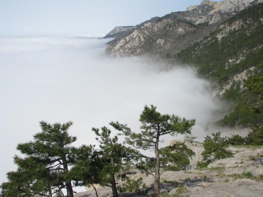 Шаан Кая в тумане