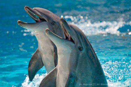 """Дельфинарий """"Коктебель"""""""