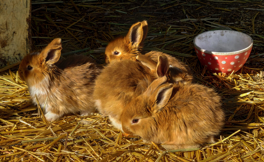 Сакский кроликопарк