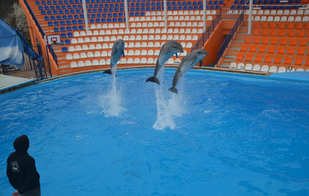 Театр морских животных в Алупке