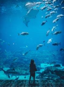 Крымские аквариумы