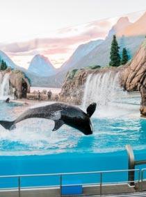 Дельфинарии в Крыму