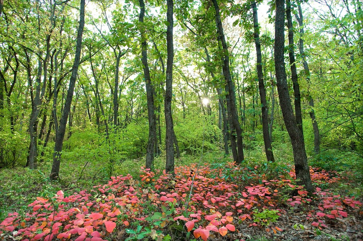 Агармышский лес